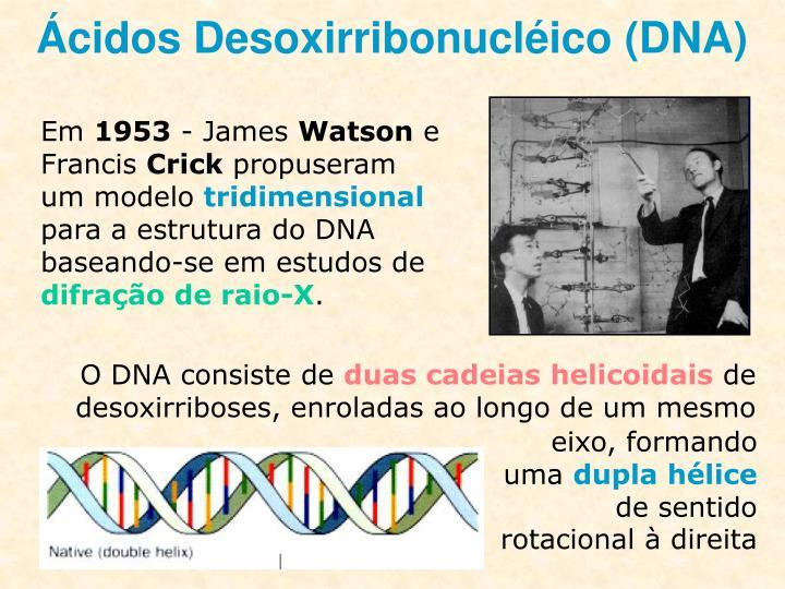 O DNA consiste de