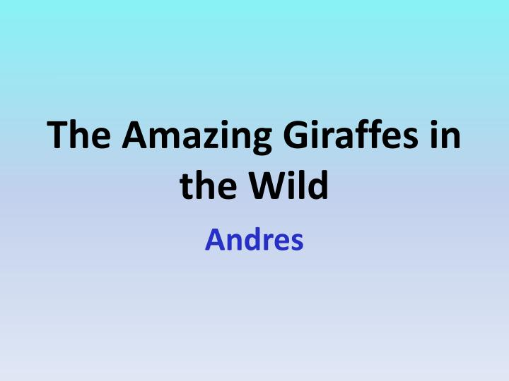 The amazing giraffes in the wild