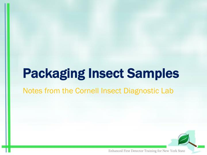 Packaging Insect Samples