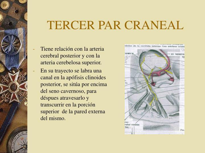 TERCER PAR CRANEAL