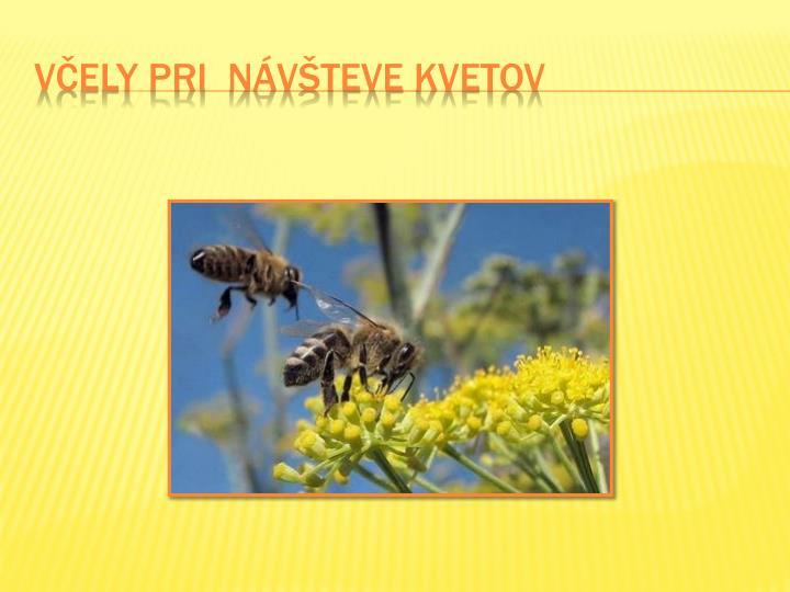 Včely PRI