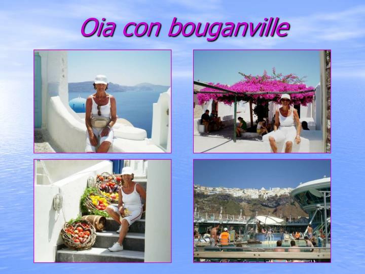 Oia con bouganville
