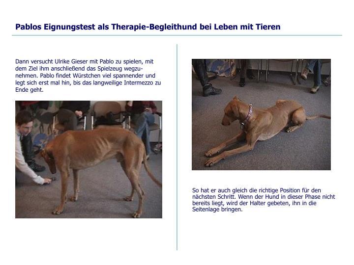 Pablos Eignungstest als Therapie-Begleithund bei Leben mit Tieren
