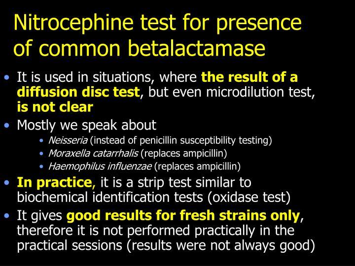 Nitrocephine test for presence of common betalactamase