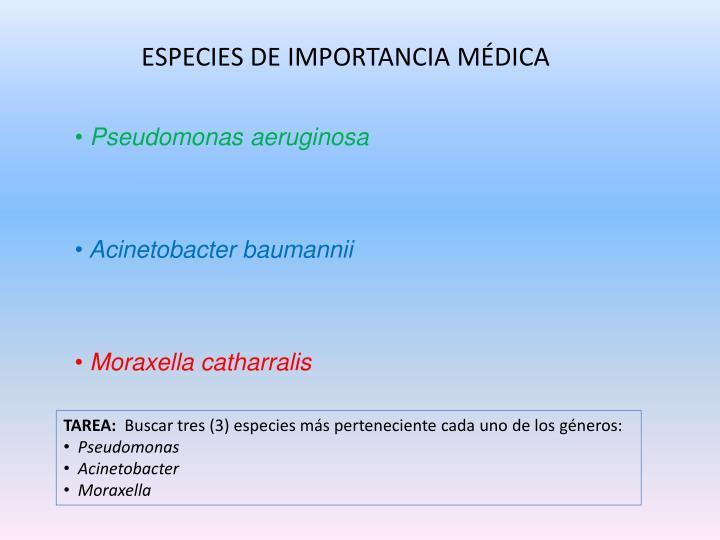 ESPECIES DE IMPORTANCIA MÉDICA