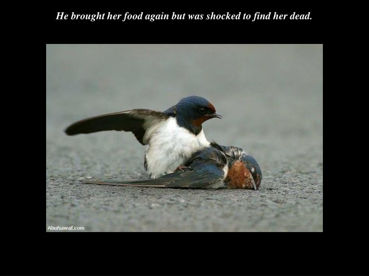 He brought her food again but was shocked to find her dead.