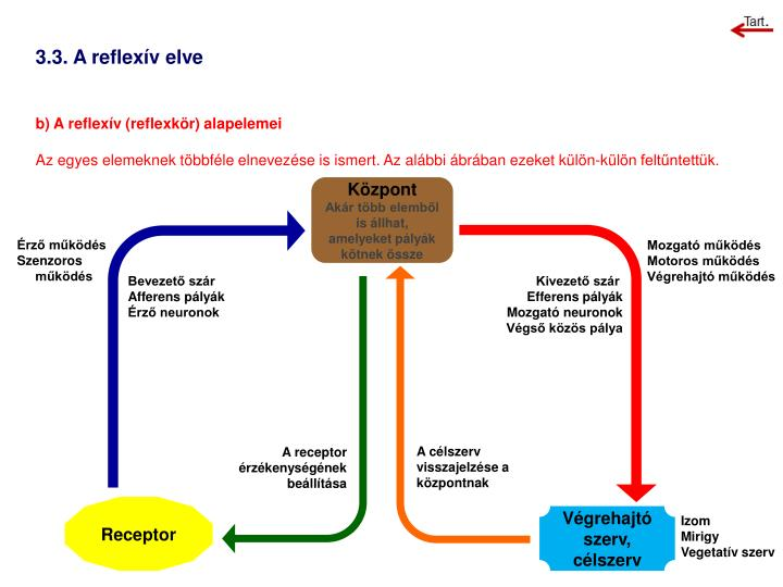 3.3. A reflexív elve