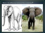 what is the difference between these elephants