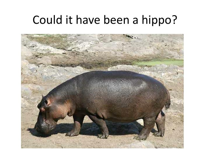Could it have been a hippo?