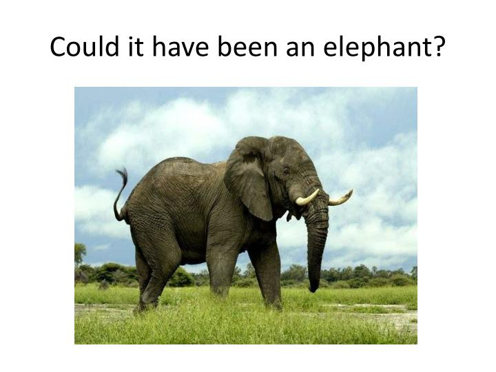Could it have been an elephant?