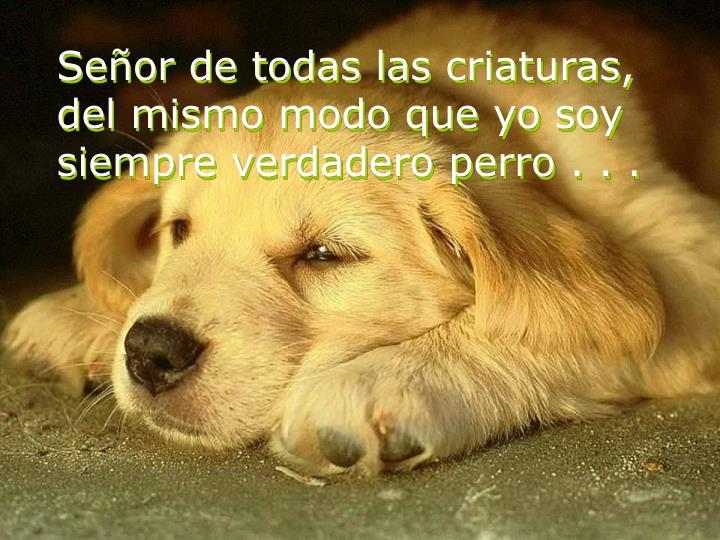 Señor de todas las criaturas, del mismo modo que yo soy siempre verdadero perro . . .