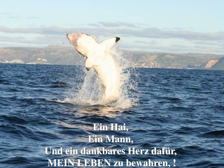 Ein Hai,