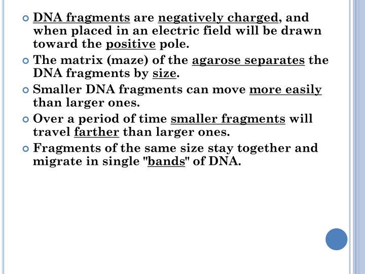 DNA fragments