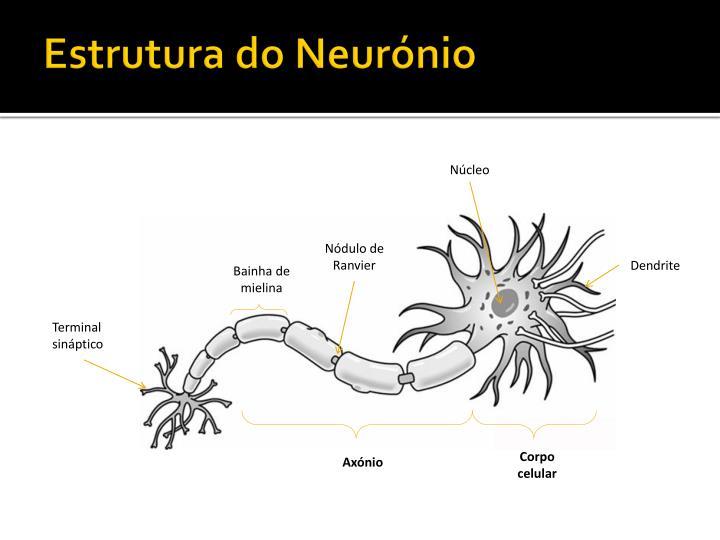 Estrutura do Neurónio