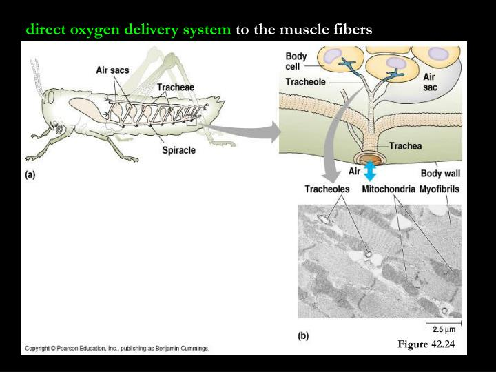 direct oxygen delivery system