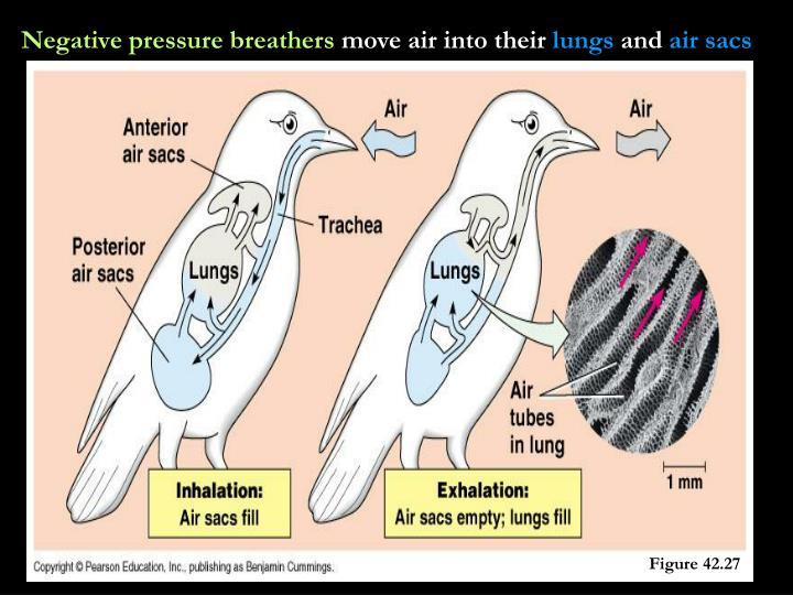 Negative pressure breathers