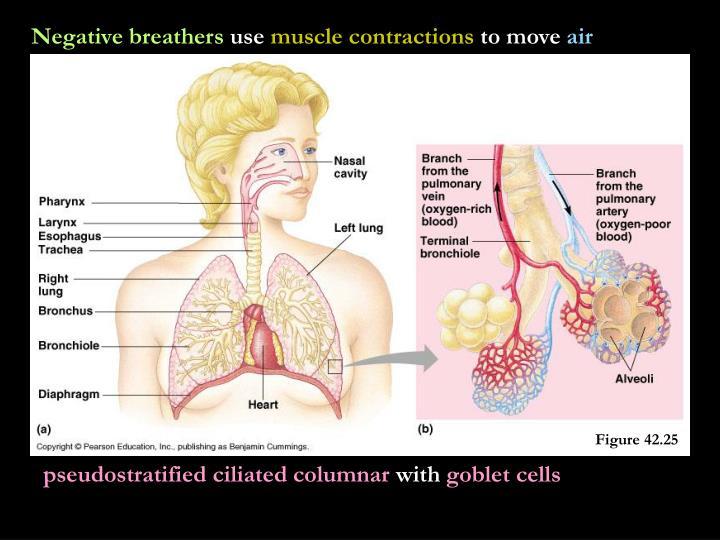 Negative breathers