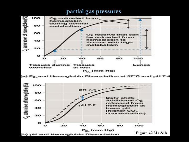 partial gas pressures