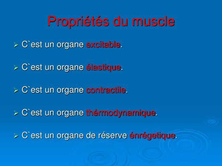 Propriétés du muscle