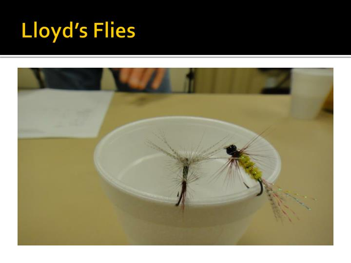 Lloyd's Flies