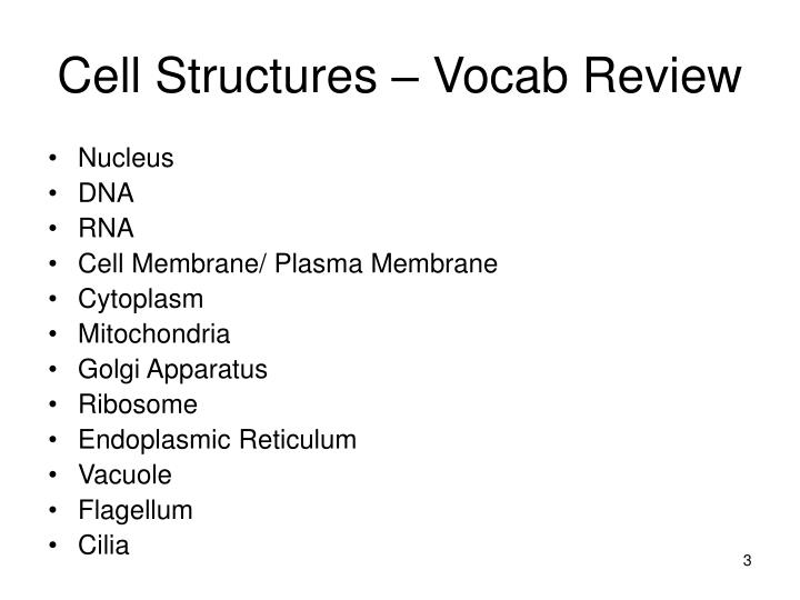 Cell structures vocab review