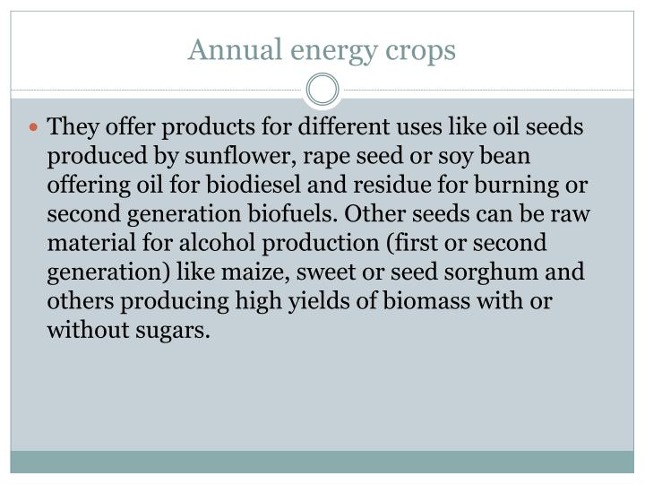 Annual energy crops