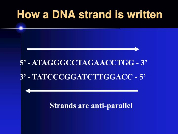 How a DNA strand is written
