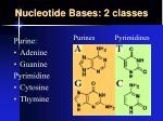 nucleotide bases 2 classes