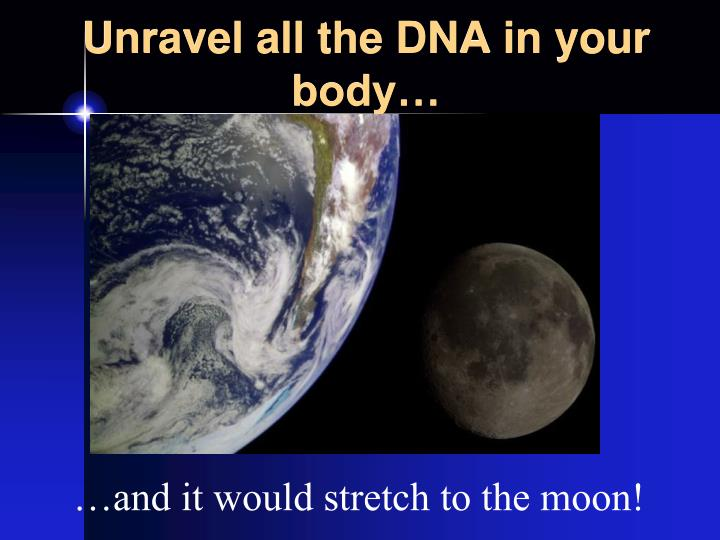 Unravel all the DNA in your body…