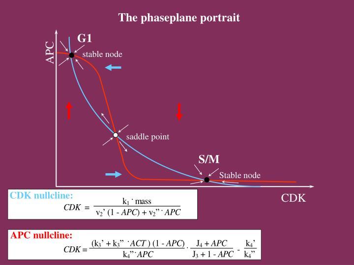 The phaseplane portrait