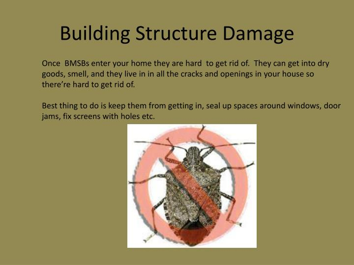 Building Structure Damage