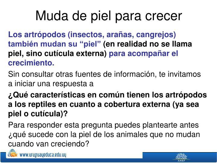 """Los artrópodos (insectos, arañas, cangrejos) también mudan su """"piel"""""""