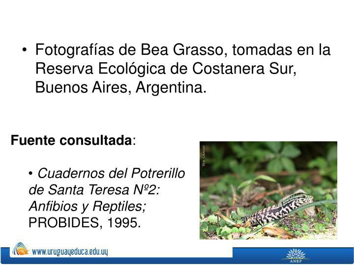 Fotografías de Bea Grasso, tomadas en la Reserva Ecológica de Costanera Sur, Buenos Aires, Argentina.