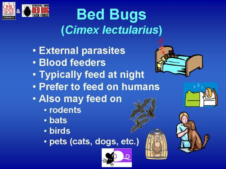You can t see bed bugs in a home they are microscopic in size