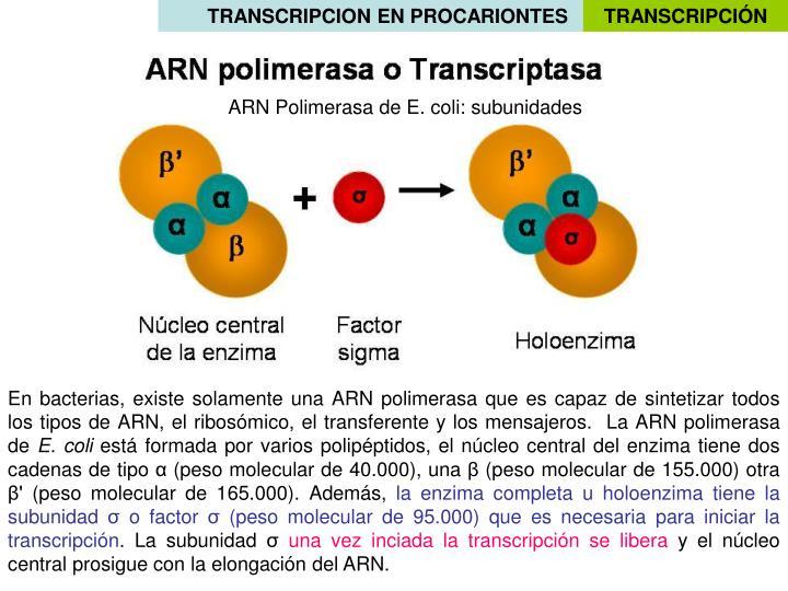 TRANSCRIPCION EN PROCARIONTES