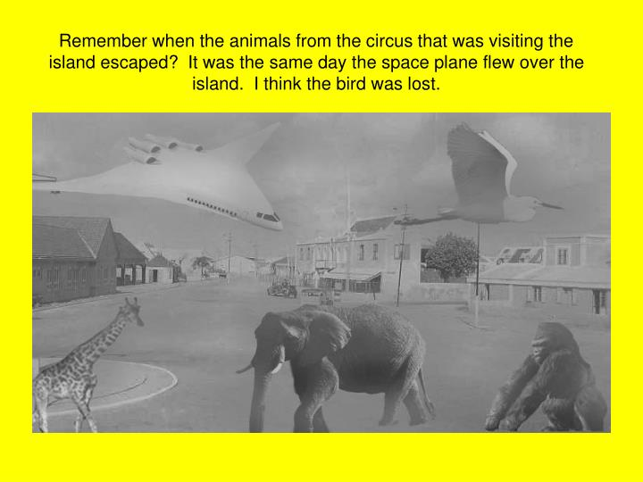 Remember when the animals from the circus that was visiting the island escaped?  It was the same day...