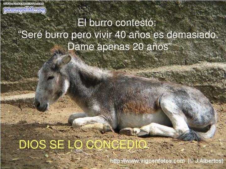 El burro contestó: