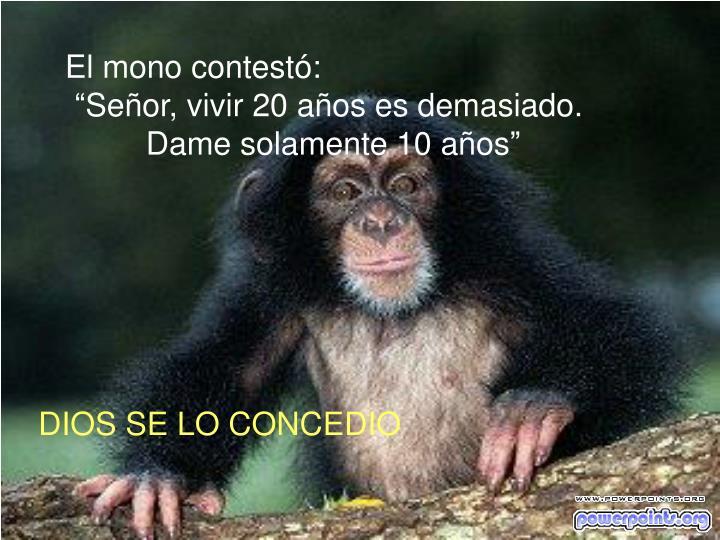 El mono contestó: