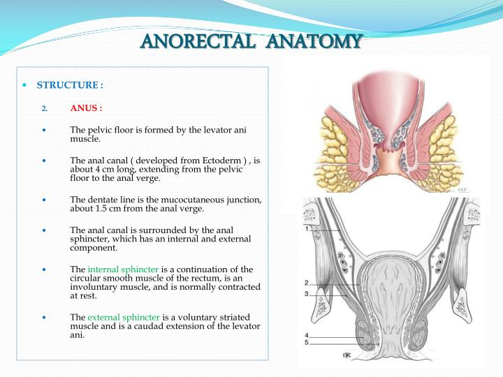 Rectosigmoid junction anatomy