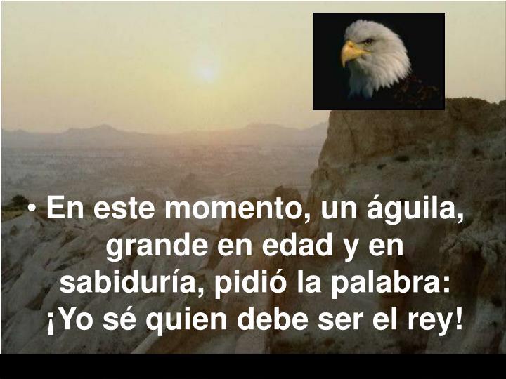 En este momento, un águila, grande en edad y en sabiduría, pidió la palabra: ¡Yo sé quien debe ser el rey!