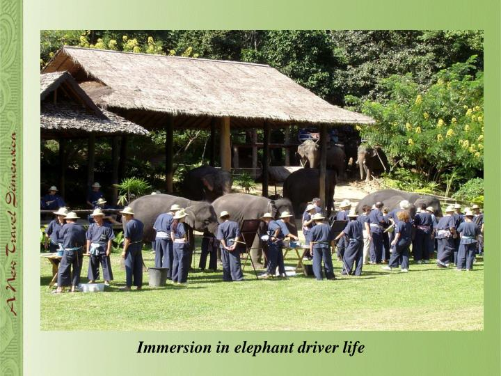 Immersion in elephant driver life