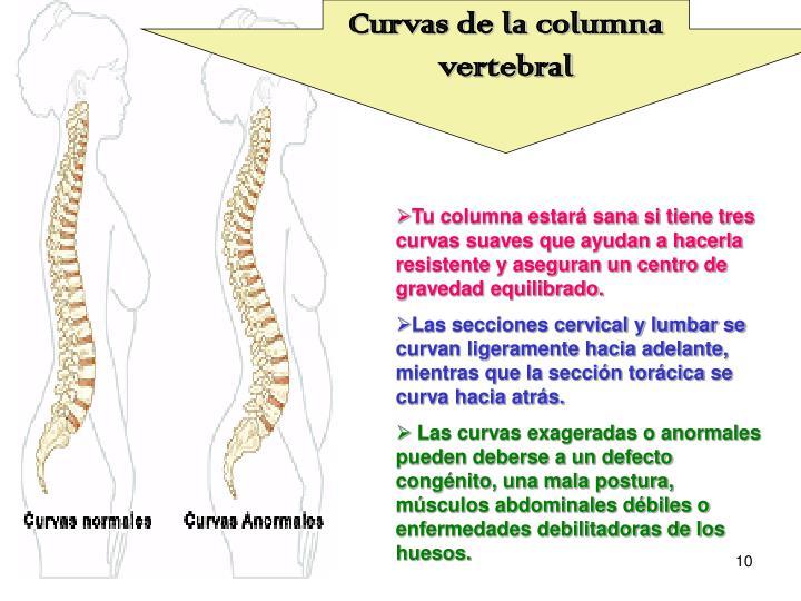 Curvas de la columna vertebral