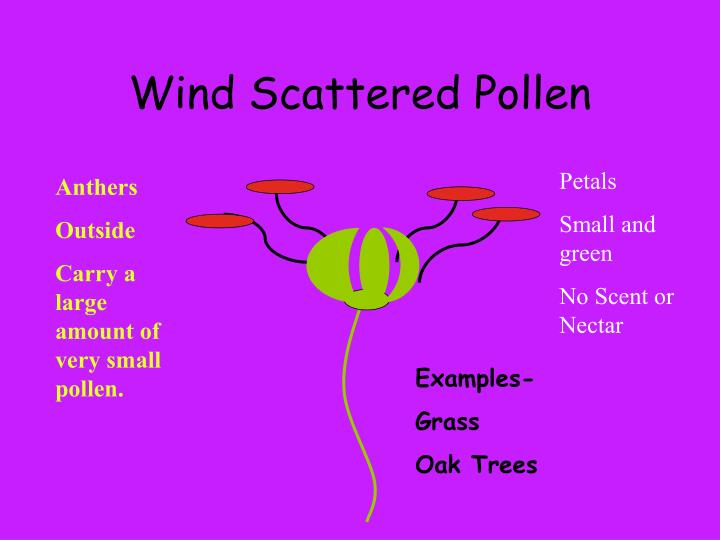 Wind Scattered Pollen