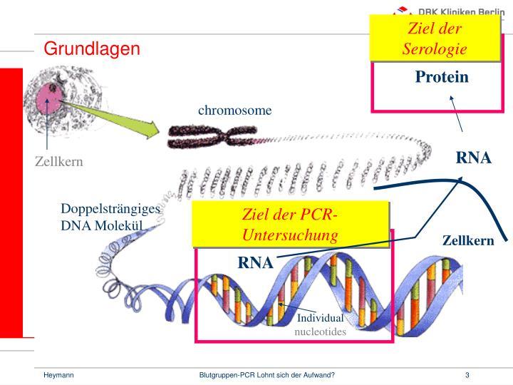 Ziel der PCR-Untersuchung