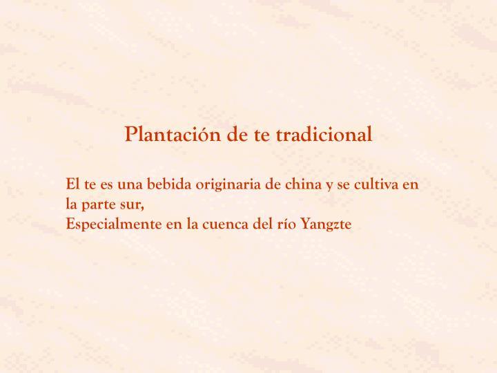 Plantación de te tradicional