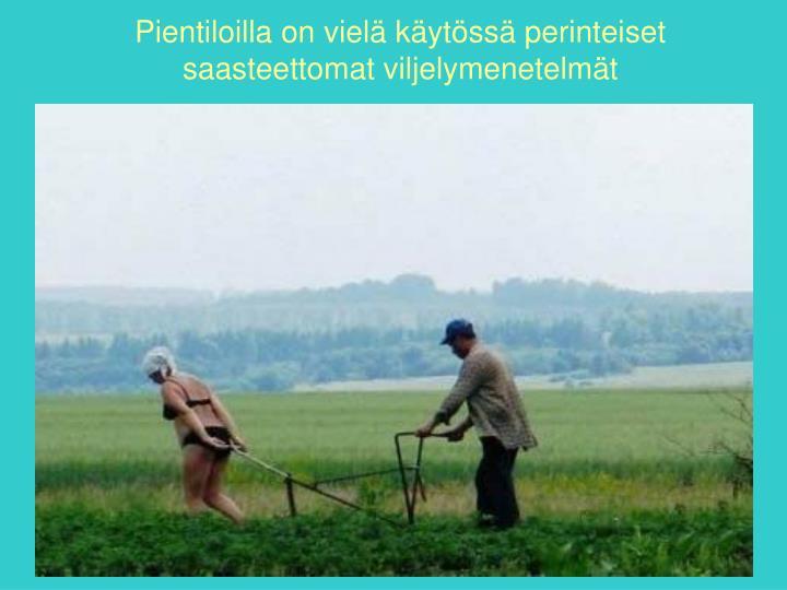 Pientiloilla on vielä käytössä perinteiset saasteettomat viljelymenetelmät