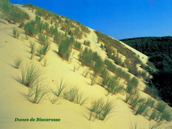 Dunes de Biscarosse