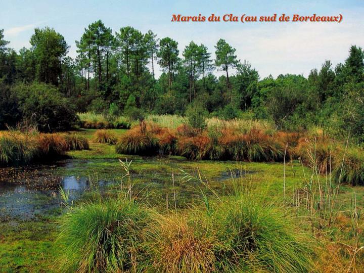 Marais du Cla (au sud de Bordeaux)