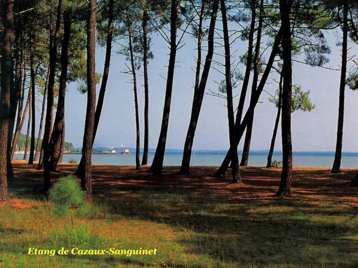 Etang de Cazaux-Sanguinet