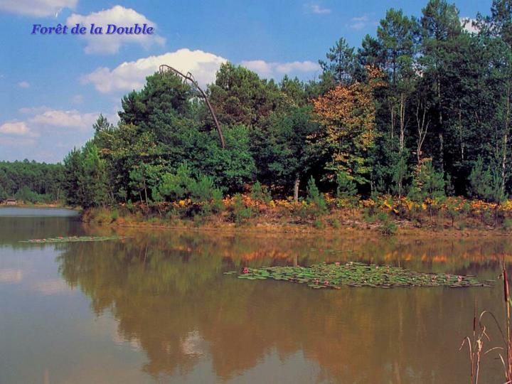 Forêt de la Double